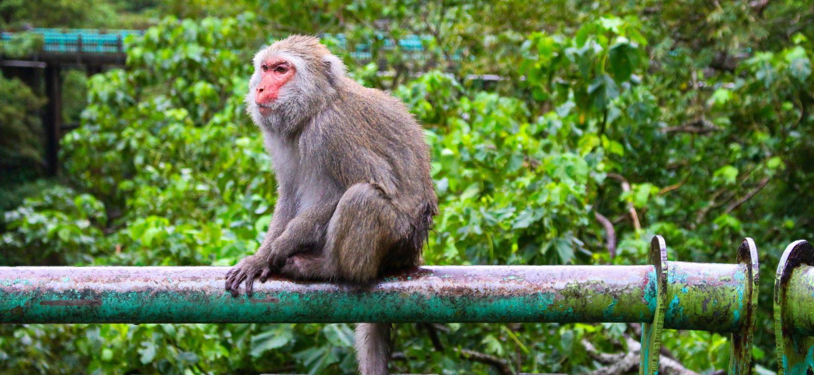 Taitung East Coast Explorer: Dulan, Sanxiantai, Monkeys and More!