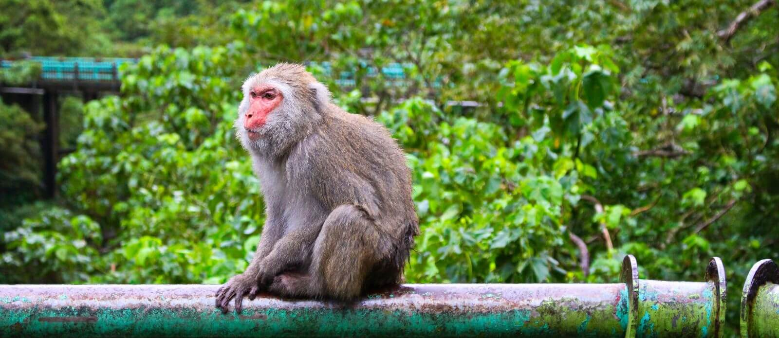 Incredible Taitung Coastal Tour: Dulan, Bridge of the Immortals, Monkeys and More!