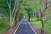 Danong Dafu East Rift Valley Hualien Tour