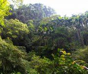 East Rift Valley Hualien Tour