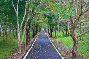 Danong Dafu Forest Park, East Rift Valley