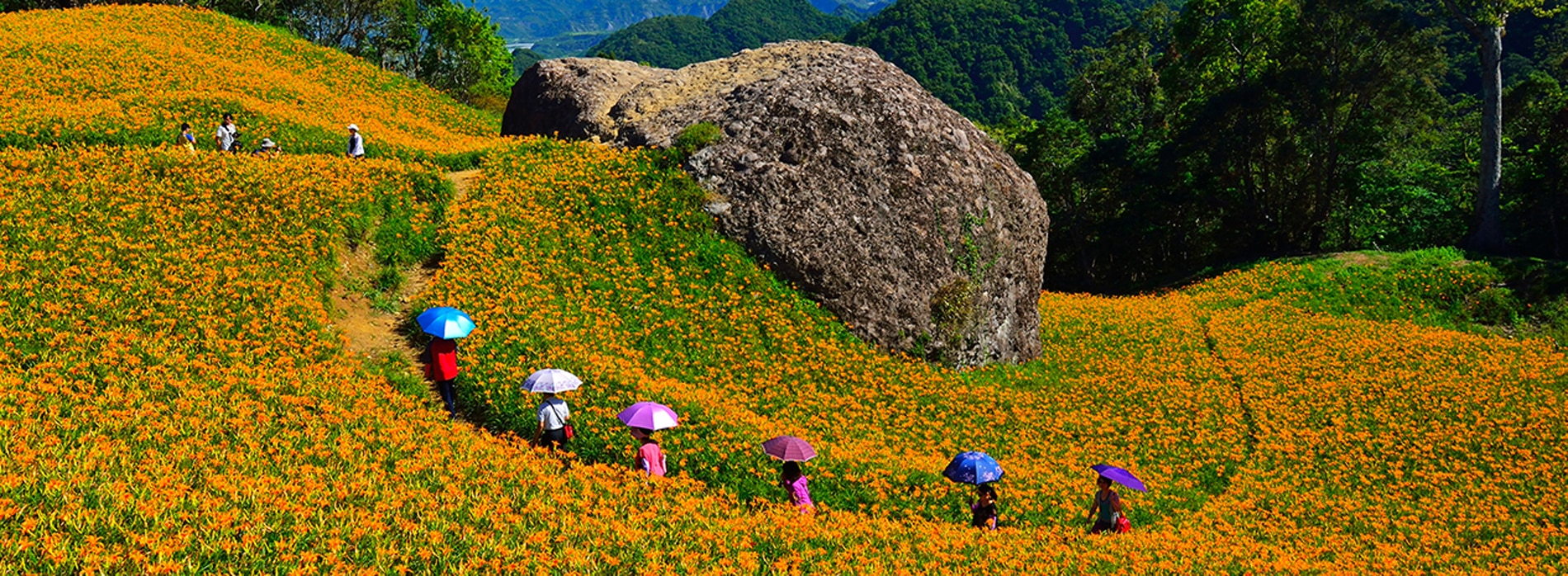 Sixty Stone Mountains Day Lily Tour (July-September Only)